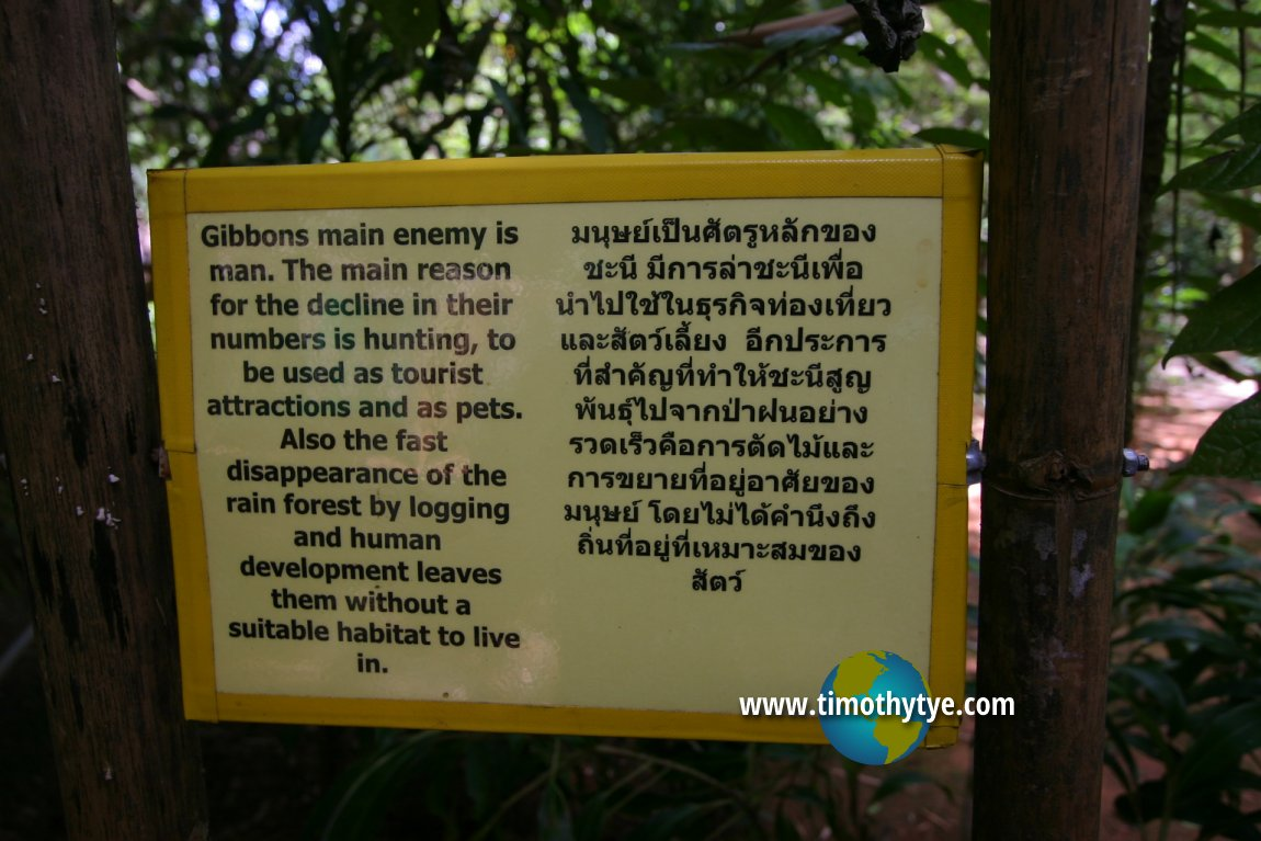 Gibbon Rehabilitation Project, Phuket